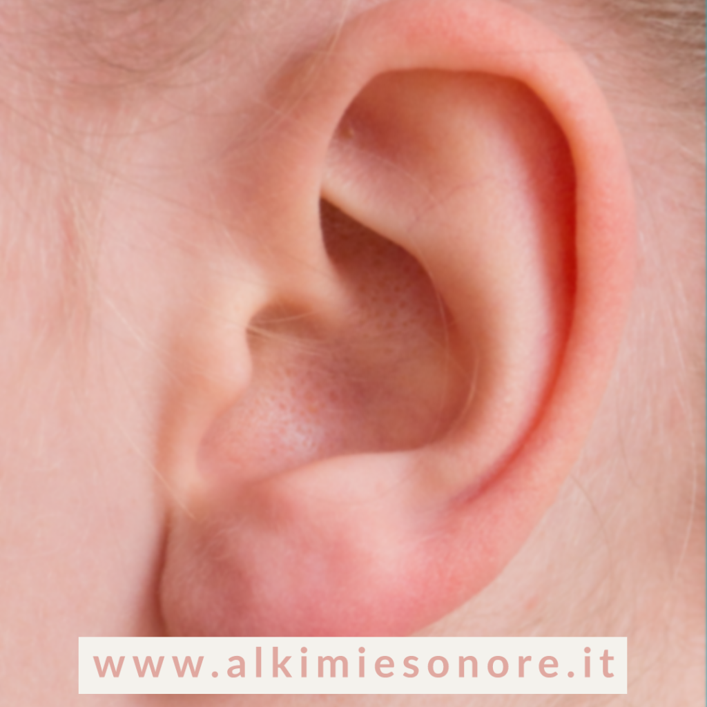 L'apparato vestibolare dell'orecchio interno
